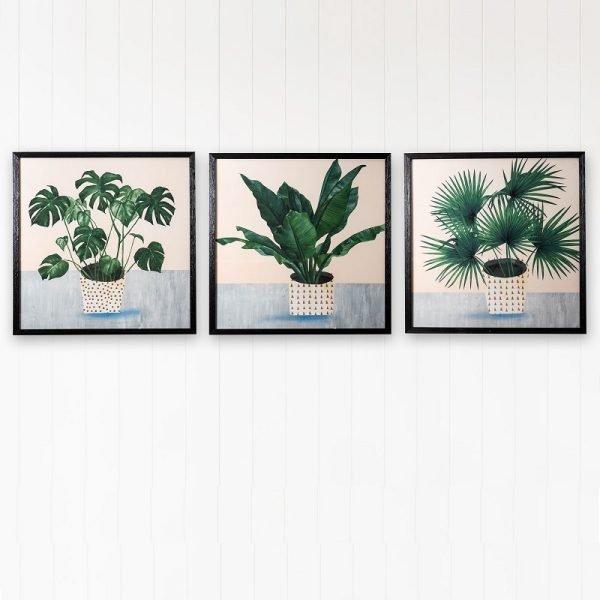 Modern Plant Illustrations - Set of 3