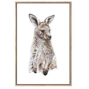 Eastern Grey Kangaroo Joey Canvas